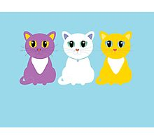 Only Three Cats Photographic Print