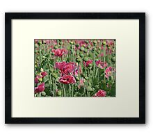 Pink Poppies Field Framed Print
