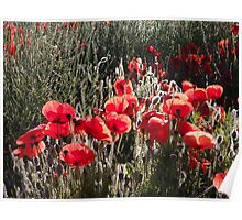 South Downs Poppies Poster