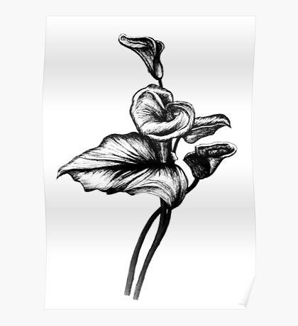 Flower Sketch Poster