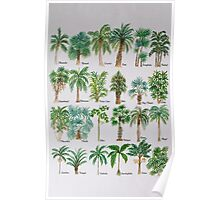 Palm tree watercolor alphabet Poster