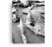 Cow Skulls//Black And White Canvas Print