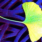 Ginko Leaf © by Ethna Gillespie