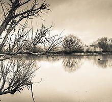 The Glebe by Noeline R