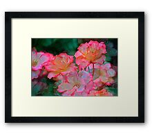 Rose 203 Framed Print