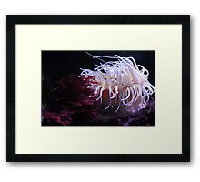 Red sea fan and anenome Framed Print