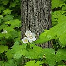 Woodland Wildflower by by Marvil LaCroix