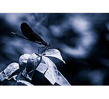 Damsell Fly on a Leaf Photographic Print