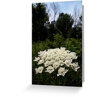 Queen Anne's Lace from A Gardener's Notebook Greeting Card