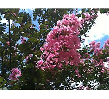 The Blossoms of Summer Photographic Print