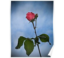 A single rose against the sky Poster