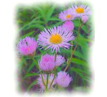 State Park Flower Photographic Print