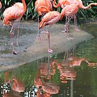 Brilliant flamingoes, Singapore by indiafrank