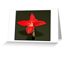 Orchid On Display Greeting Card