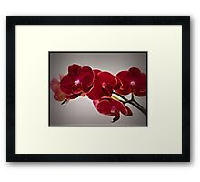 Orchids For My Birthday Framed Print