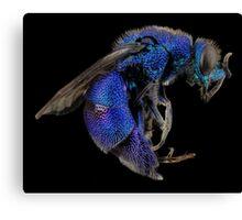 Blue Bee Canvas Print