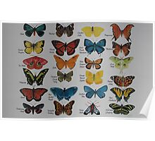 Butterfly alphabet watercolor Poster