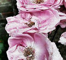 Shabby Rose Pink  by Vanessa  Hayat