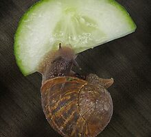 Feast fit for a Snail by Sandra Caven