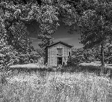 Barn In Summer Sunshine by Susan Nixon