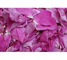 bunch petals red rose Photographic Print