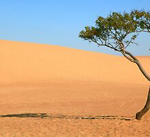 Lone Tree and Sand Dunes by Roupen  Baker