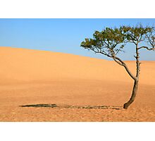 Lone Tree and Sand Dunes Photographic Print