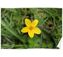 Small Yellow Flower Poster