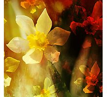 Daffie Dreams Abstract Photographic Print