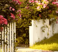 White Picket Fence by Jessica Jenney
