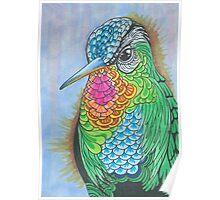 Rainbow Hummingbird Pen and Ink Illustration Poster