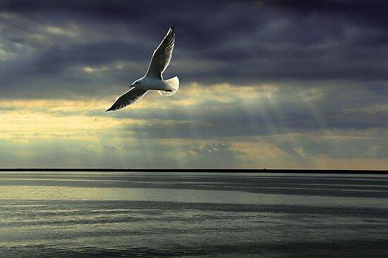 Jonathan Livingston Seagull  by Bob Martin
