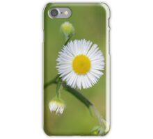 Daisy flower on green grass iPhone Case/Skin