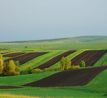 Green Yellow Black Field by valeriedesign