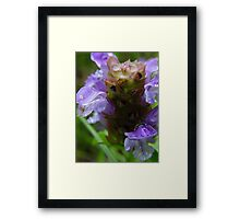 Heal-all Framed Print