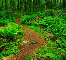 Hiking Trail by jswolfphoto