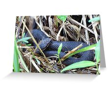 Coiled Greeting Card
