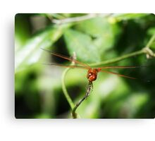 Red2 Canvas Print