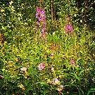 Fireweed & Roses by Yukondick