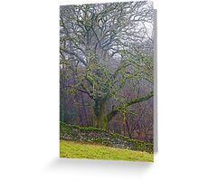 Clothed in Moss Greeting Card