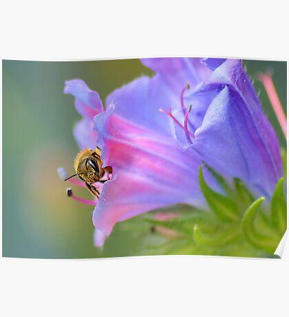 Bee in the Garden Poster