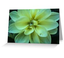 Flower After a Rainy Day  Greeting Card