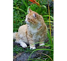 BobCat Among The Flowers Photographic Print