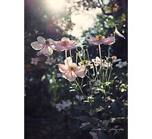 In a Country Garden Photographic Print
