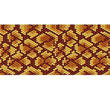 Snake Skins Photographic Print