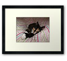 All you need is Tortitude Framed Print