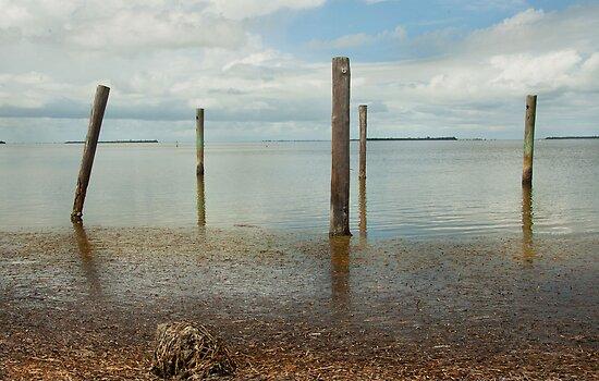 Along Pine Island Sound  by John  Kapusta