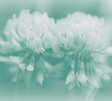 Not-So-White White Clover by MotherNature