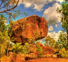 Cranky Rock sedated by Michael Matthews