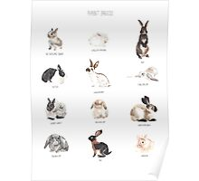 Rabbit Breeds Poster